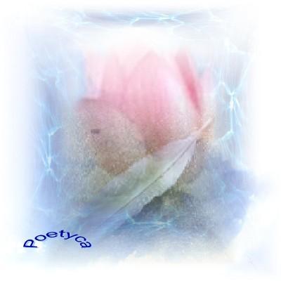 La colomba e la rosa
