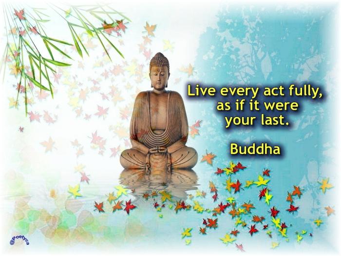buddha24