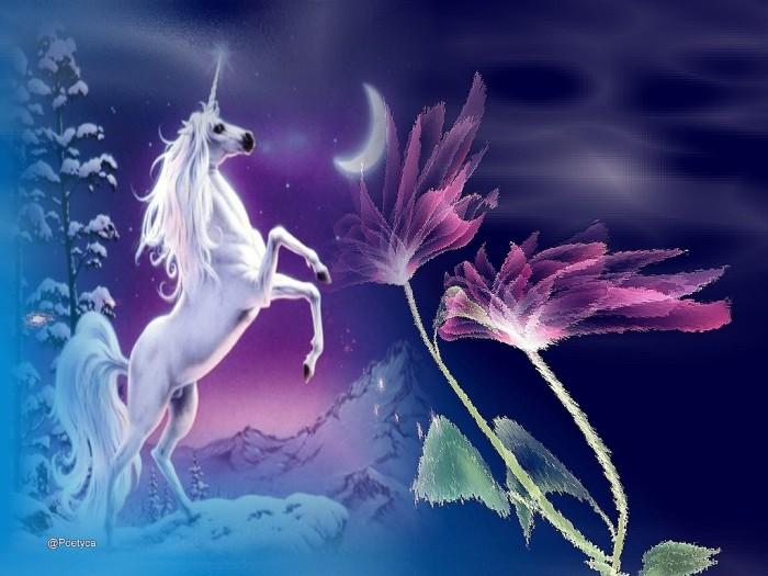 Unicorno | tavolozza di vita