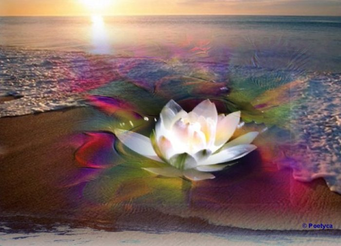 Una perla al giorno - Dhammapada