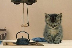 cat,peace