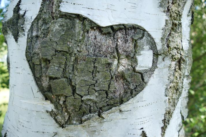 infatuation tree.jpg